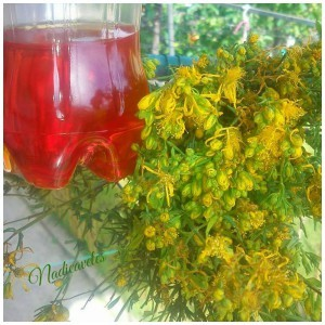 Кантарион во маслиново масло, тинктура и чај